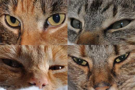 Katzenfotos - hier kllicken